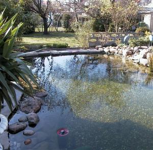 如何正確選擇園林魚池過濾器!