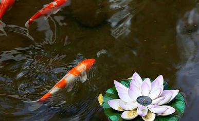鱼池水处理